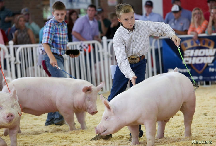 FILE - Youngsters exhibit their pigs at the World Pork Expo in Des Moines, Iowa, June 4, 2014. The 2018 expo is in session and runs through June 8.