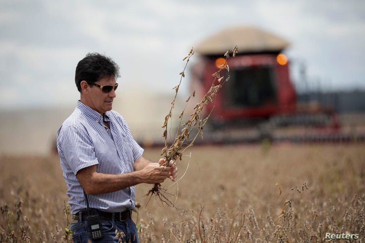 Farmer Julimar Pansera inspects plants during the soy harvest near the town of Campos Lindos, Brazil, Feb. 18, 2018.