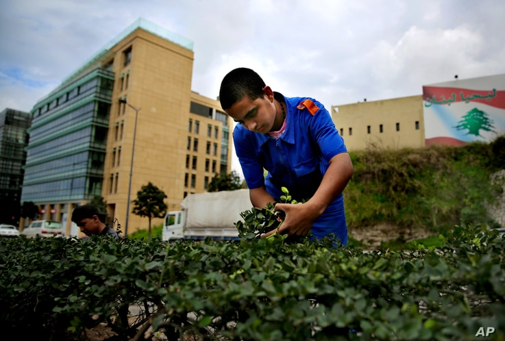 Syrian refugee Ibrahim al-Abd, 15, who fled with his family from Deir el-Zour, Syria, trims plants on a street in downtown Beirut, Lebanon, March 4, 2016.