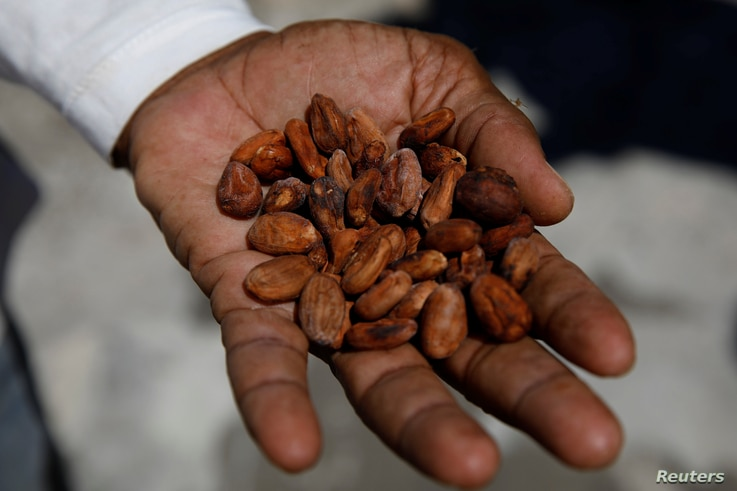 Yoffre Echarri holds cocoa beans on the roof of his house in Caruao, Venezuela, Oct. 24, 2017.