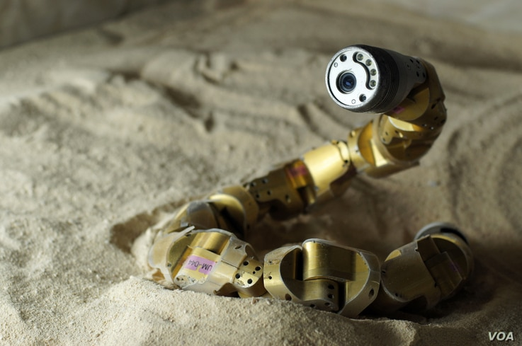 CMU scientists adapt the snake robot model from what they learn about how sidewinder rattlesnakes move. (Nico Zevallos and Chaohui Gong)