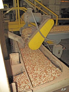 After boll weevils destroyed the cotton crop, Enterprise soon produced more peanuts than any other region in US.
