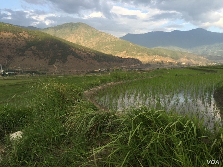 Bhutan is facing a scarcity of labor on its farms as young people prefer life in the cities.  (A. Pasricha/VOA)