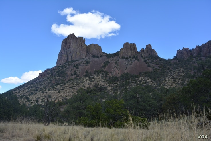 Human influence has had an impact on what used to be tracts of thick, green growth in southwestern Texas, but lush vegetation can still be found in the desert around the Chisos mountain range.