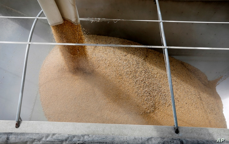 Soybeans are loaded into a trailer at the Heartland Co-op, April 5, 2018, in Redfield, Iowa.