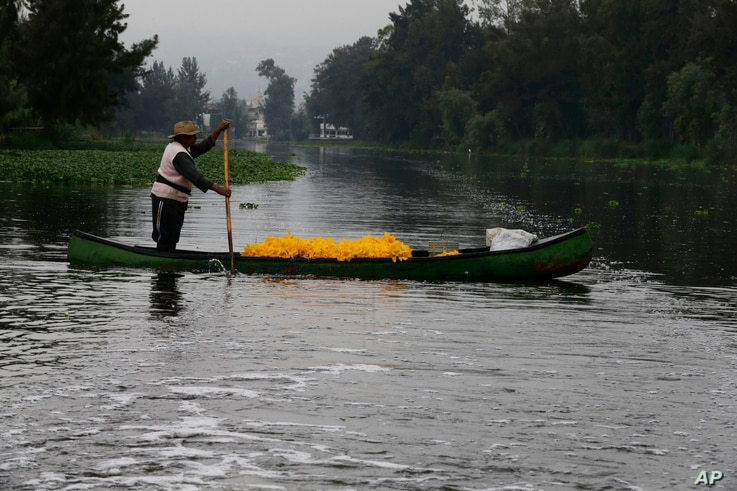 A farmer moves his harvest of squash flowers through the channels of Xochimilco in Mexico City, July 13, 2017.