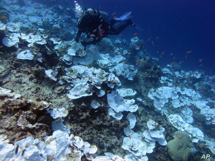 This May 2016 photo provided by NOAA shows bleaching and some dead coral around Jarvis Island, part of the U.S. Pacific Remote Marine National Monument.