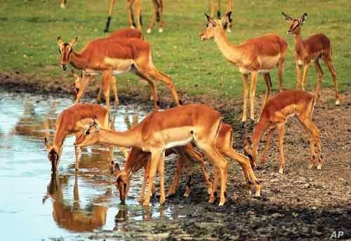 The Eastern Cape area sustains a large variety of antelope species, and is therefore excellent at also supporting large numbers of predators