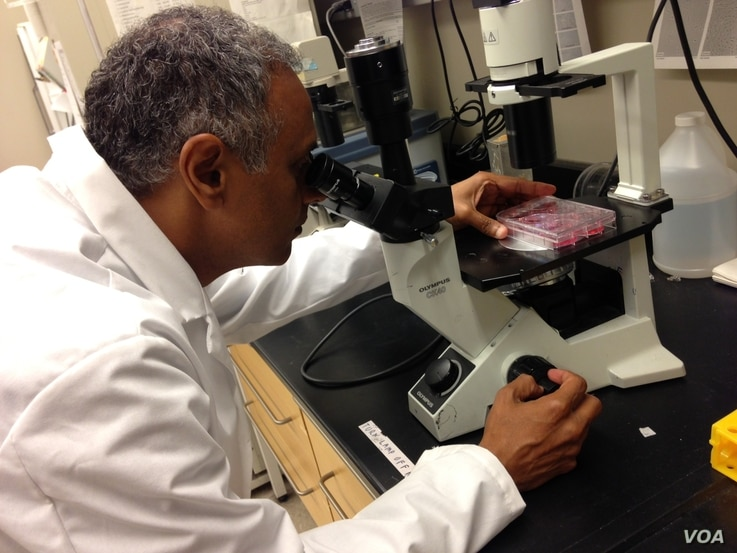 Dr. Akhilesh Pandey examines fetal cells under an Olympus inverted microscope. (Credit: Julie Taboh)