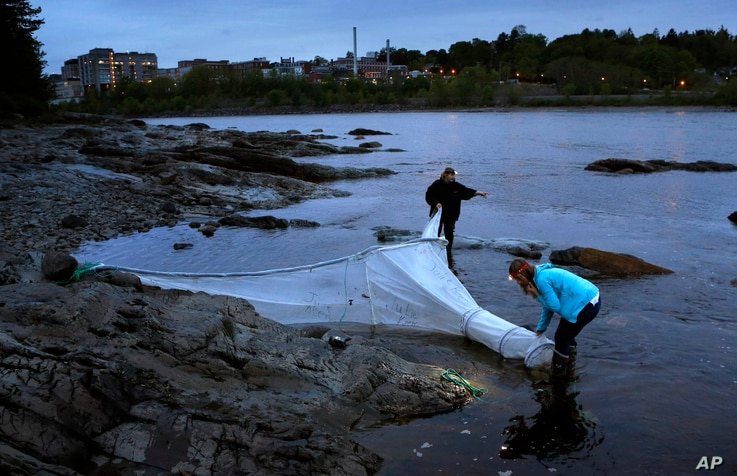 FILE - Licensed eel fishermen Julie Keene and Jessica Card work on the banks of the Penobscot River after setting a net in Brewer, Maine, May 25, 2017.