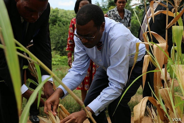 FILE - African Development Bank President Akinwumi Adesina, recipient of the 2017 World Food Prize, inspects plants.