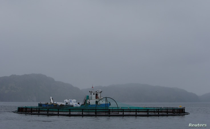 A fish farming cage for trout and salmon growth, belonging to the company Russian Aquaculture, is seen at the coastline of the Ura Bay, in the northwestern Murmansk region, Russia, Aug. 2, 2017.