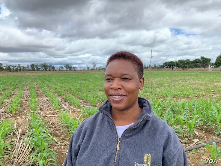 Esnath Hamadziripi, a researcher at International Maize and Wheat Improvement Center in Mazowe on Dec. 10, 2018, says in Zimbabwe, three-in-five seasons are expected to be bad for farmers and El Nino is making that worse.