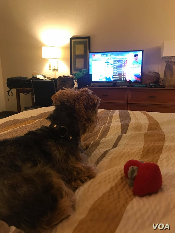 When they're not attending to their dogs, most of those who have taken refuge from Hurricane Florence at a Jacksonville, Florida, hotel spend a lot of time watching the Weather Channel, Nila Belfiore-Dulay said. Sometimes, the dogs seem interested, t...