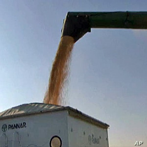 Corn prices on global markets have risen 77 percent over a year ago. Critics blame ethanol production.