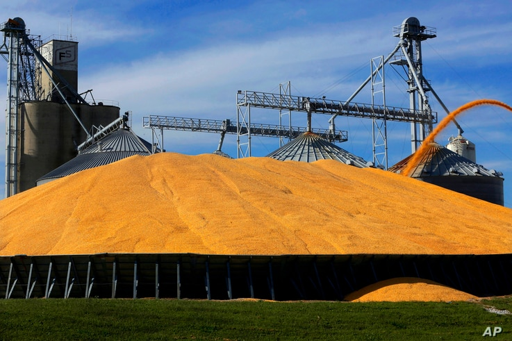 FILE - Central Illinois farmers pile harvested corn on the ground outside a full grain elevator in Virginia, Ill., Sept. 23, 2015.
