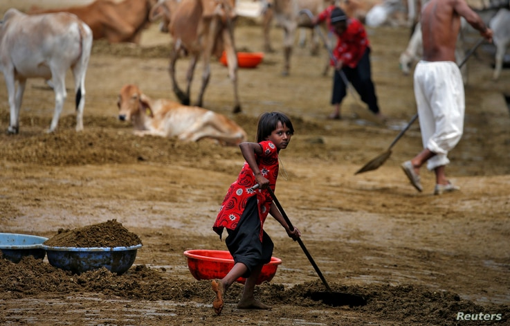 A girl clears cow manure at a Gaushala or cow sanctuary in Barsana, India, June13, 2017.