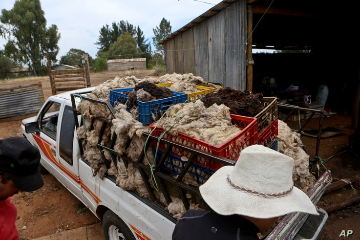 Workers load wool at a farm in Cauquenes, Chile, Feb. 2, 2017. Hundreds of small sheep farmers, beekeepers and wine producers in Chile have been gravely affected by the massive wildfires that hit the area during the last couple of weeks.