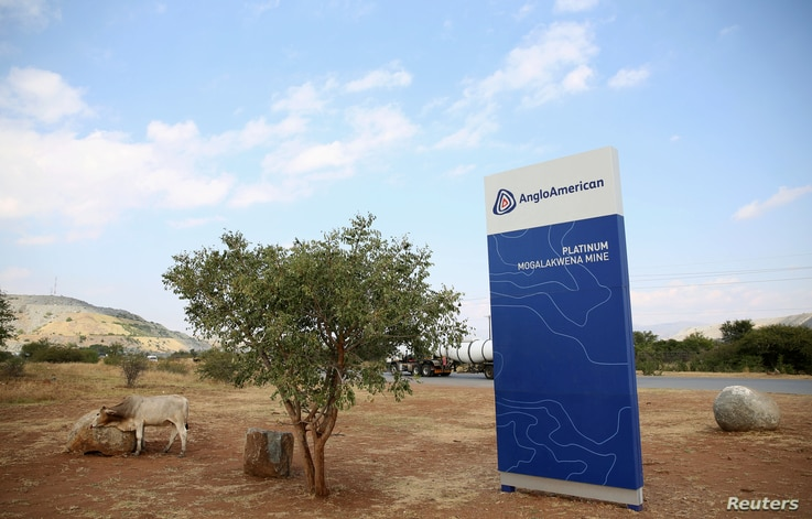 FILE - A cow is seen near the AngloAmerican sign board outside the Mogalakwena platinum mine in Mokopane, north-western part of South Africa , Limpopo province, May 18, 2016.