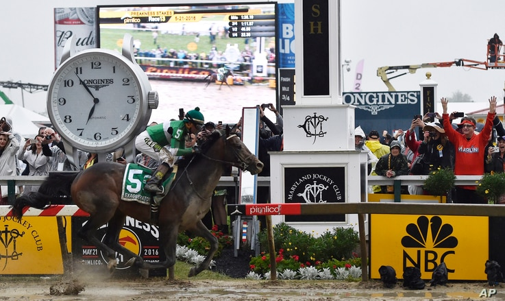 Exaggerator with Kent Desormeaux aboard wins the 141st Preakness Stakes horse race at Pimlico Race Course in Baltimore, May 21, 2016.
