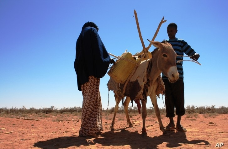A woman readies a donkey to move water in Ufule Sanaag, January 2011