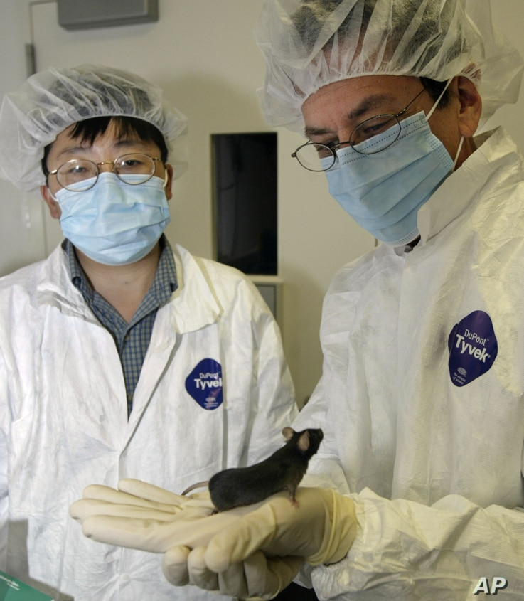 FILE - Researchers Ronald Evans, right, and Yongxu Wang of the Salk Institute for Biological Studies in San Diego look at a mouse whose stamina was improved through genetic engineering in August 2004. Such a capability moves the issue of Olympic dopi...