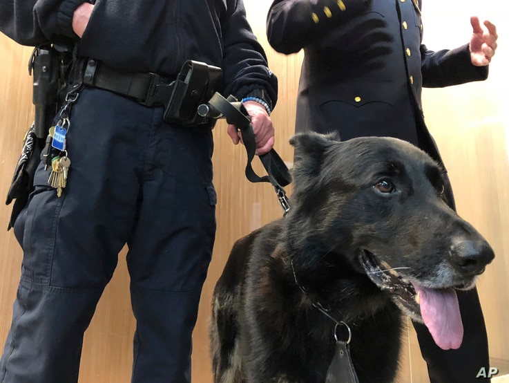Franky, one of the NYPD's new explosive odor pursuit dogs, stands with his handler, Officer Nicholas Scotti, left, as Counterterrorism Chief James Waters, right, talks to reporters about preparations for the Macy's Thanksgiving Parade, during a news ...