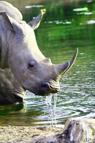Highly sophisticated and well-resourced international crime syndicates are targeting South Africa's rhinos, say experts