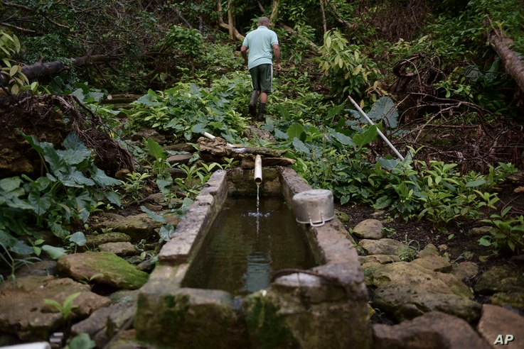 """In this Dec. 22, 2017 photo, Jose Luis Gonzalez walks through a ravine known as """"La Raja de Rosa,"""" where people from Barrio Patron get their water, in Morovis, Puerto Rico."""