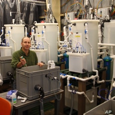 NOAA Fisheries biologist Paul McElhany in his Seattle lab.