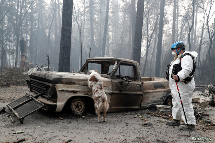 Trish Moutard, of Sacramento, searches for human remains with her cadaver dog, I.C., in a truck destroyed by the Camp Fire in Paradise, California, U.S., Nov. 14, 2018.