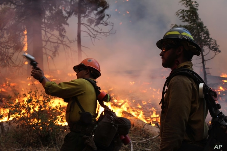 In this photo provided by the U.S. Forest Service, fire crew members stand watch near a controlled burn operation as they release a very pistol, as they fight the Rim Fire near Yosemite National Park in California, Sept. 2, 2013.