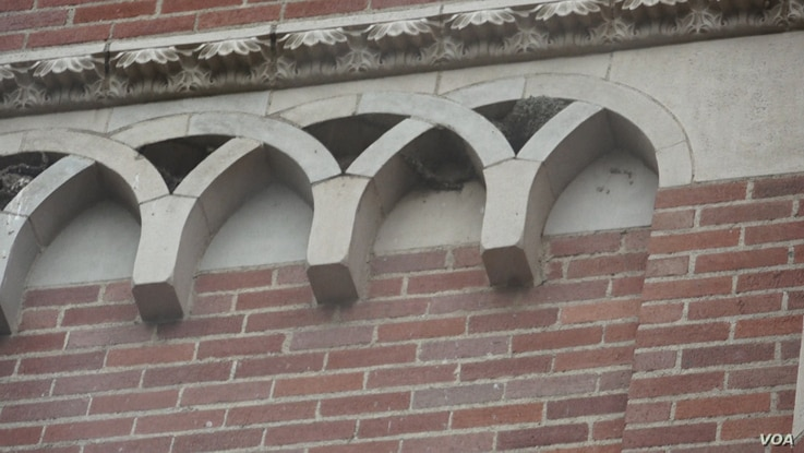This is an example of how animals, birds in this case, have used human created structures, such as this building, and made it a home. It is a building on the campus of University of California Los Angeles.