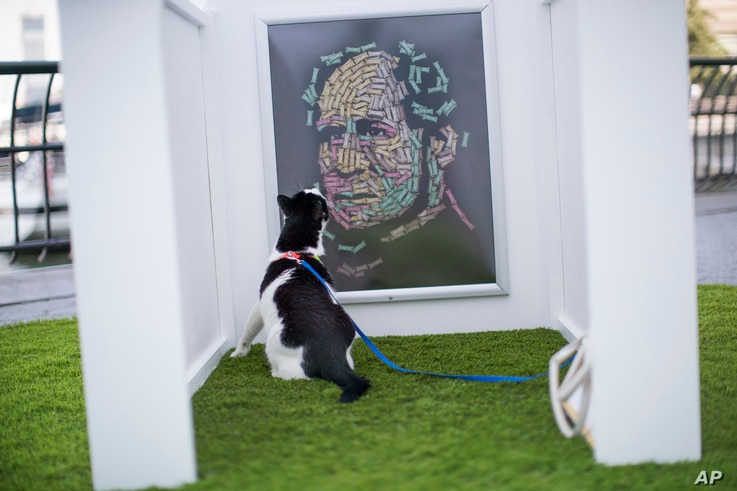"Bug, a domestic shorthair cat, inspects Noah Scalin's ""The Hand That Feeds"" at dOGUMENTA (I) NYC, Aug. 11, 2017, in New York. The art show, featuring 10 sculptures and installations created specifically for dogs, will be on display at Brookfield Plac..."