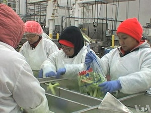 Once a week, Burmese refugee workers at Coastal Sunbelt Produce, in Maryland, take English lessons during their lunch hour.