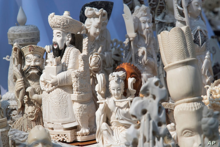 Ivory sculptures are on display before being crushed, Aug. 3, 2017, in New York's Central Park.