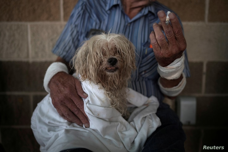 FILE - Bentley, a 10-year-old maltese, takes refuge with his owner in a school after they lost their home to Hurricane Harvey in Rockport, Texas, Aug. 26, 2017.