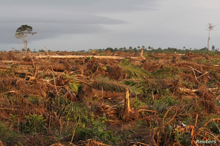 FILE - Land cleared for a Socfin palm oil plantation is seen in Malen chiefdom in Pujehun district in southern Sierra Leone, Oct. 27, 2011.