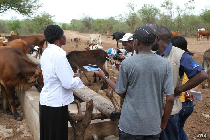 Nurse Dube, one of the farmers in Lupane district who switched to cattle ranching, says her livestock now have a reliable source of water and food, which helps her have a source of income. (s. Mhofu for VOA)