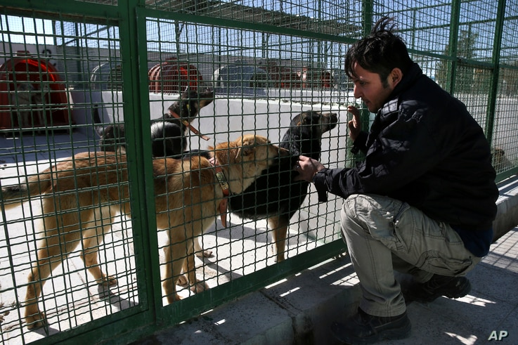 A Tehran's urban animal control worker treats stray dogs at Aradkouh Stray Dogs Shelter in a southern outskirt of the capital Tehran, Iran, March 5, 2017.