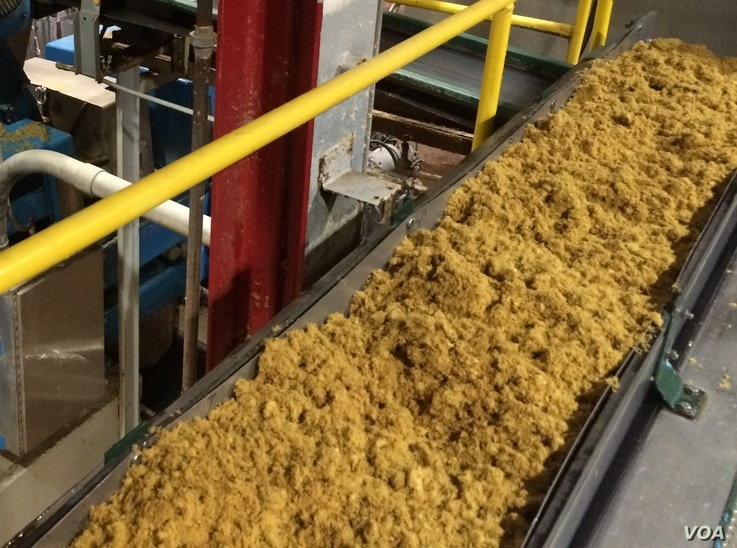 Agriculture fiber pulp moves along a conveyor belt at the Genera Energy plant, on its way to becoming compostable products, like PulpWorks' Karta-Pack.