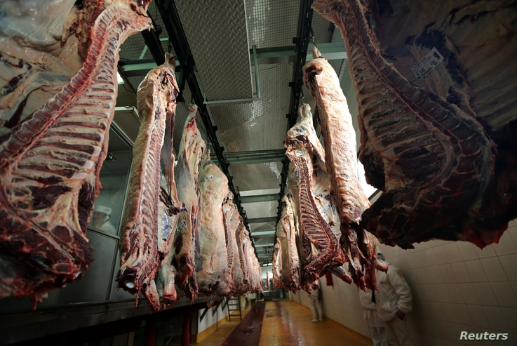 Workers walk behind beef carcasses at the Ecocarne Meat Plant slaughterhouse in San Fernando, Argentina, June 26, 2017. Picture taken June 26, 2017.