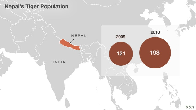 Royal Bengal tiger population in Nepal.