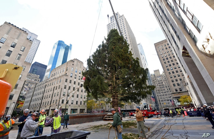 Workers raise the 2018 Rockefeller Center Christmas tree, a 72-foot tall, 12-ton Norway Spruce from Wallkill, N.Y., Nov. 10, 2018, in New York.