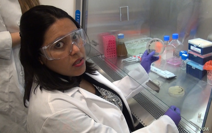 Chemical engineer Anushree Chatterjee shows one of the Petri dishes holding dangerous superbugs.