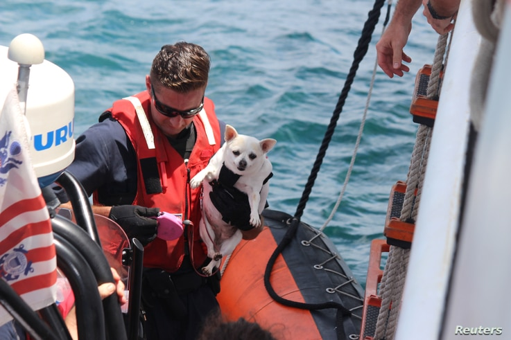 A crew member aboard the Coast Guard cutter Valiant brings a dog aboard after evacuating more than 95 people and pets from St. Thomas as part of Hurricane Irma response and relief efforts in St. Thomas, U.S. Virgin Islands, Sept. 12, 2017.