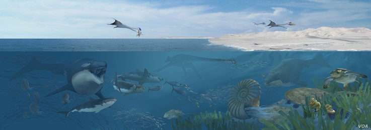 An artist's rendering of Angola's Cretaceous seas 72 million years ago, dominated by many species of large, carnivorous marine reptiles. (Karen Carr Studios, Inc.)