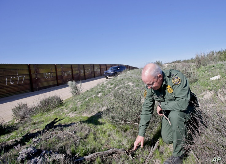 FILE - Border Patrol agent Richard Gordon, a 23-year veteran of the agency, examines broken dried branches that indicate human traffic near the border fence where illegal immigrants enter the United States in the Boulevard area east of San Diego, Cal...