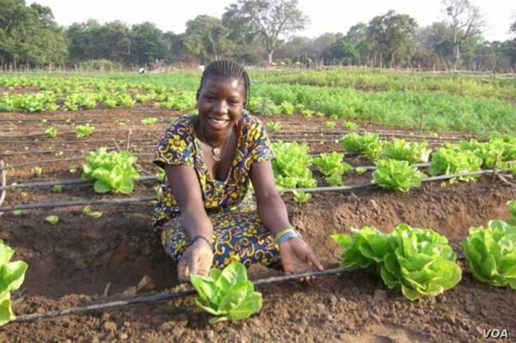 Electricity has made it possible for villagers in Benin to produce tons of food. (SELF)