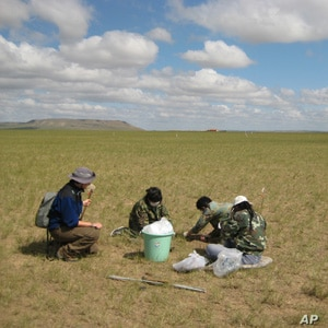 Arianne Cease, left, and field assistants collect grass in a heavily-razed field to test for plant nitrogen, carbon and protein content.